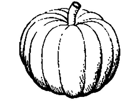 black and white clipart black and white pumpkin clip 101 clip
