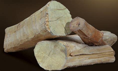 Bibit Kayu Cendana tanaman cendana sandalwood bibitbunga