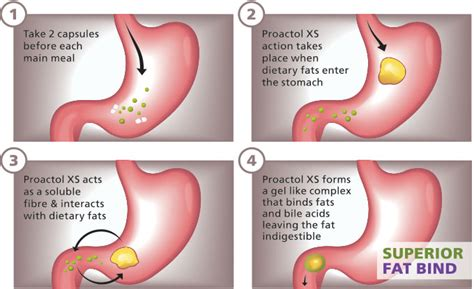 Fatty Stool Weight Loss by Proactol Xs Review Which Diet Pills