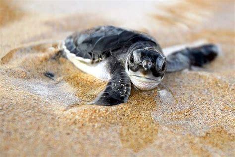 tartaruga d acqua alimentazione comprare tartarughe tartarughe acquisto tartarughe