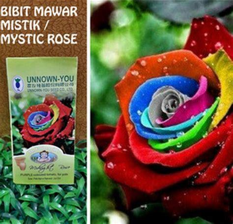Benih Anggur Rainbow waspada benih impor palsu seeds bibitbunga