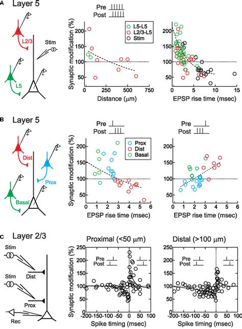 frontiers paradigm shift in dendritic frontiers dendritic synapse location and neocortical