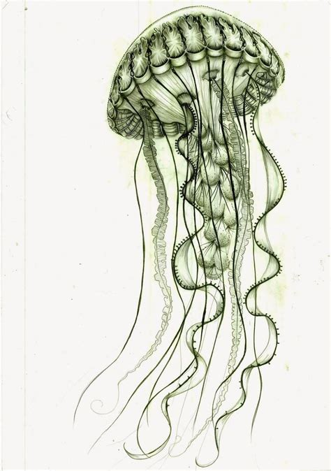 bonnie blue tattoo bonny green jellyfish design tattooimages biz