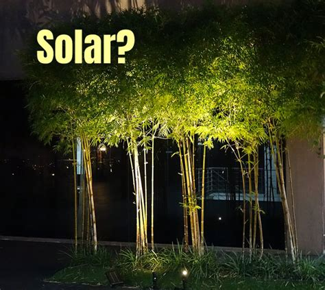 What Are The Best Solar Spot Lights For Trees