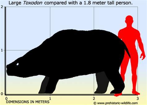 5 Meters To Feet toxodon