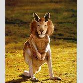 photoshopped-animals