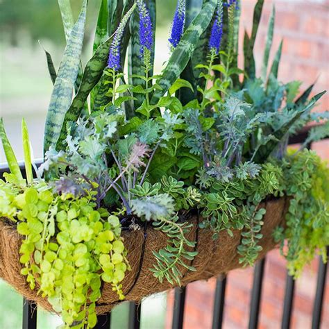 best small hanging plants 25 best ideas about railing planters on pinterest