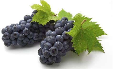 best grape seed grape seed extract in top ten best selling