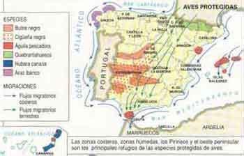 aves de espaa y 846772417x mapa fauna de espaa especies de animales futbol jabe