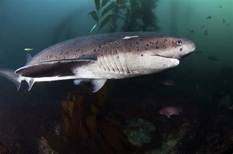 Everything You Need to Know About Shark Diving | Diviac ...