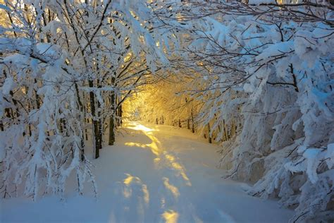 Winter Yellow forest snow trees italy path white yellow
