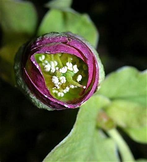 la riproduzione dei fiori scoperto il segreto dell impollinazione un microchip