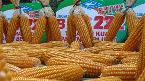 Benih Jagung Bisi 816 dihadiri ribuan petani dalam dan luar negeri bisi