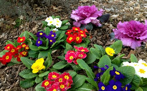 winter garden flowers patios northern virginia landscape and portrait in same