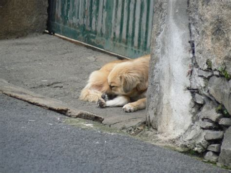 fundraiser by brenda farrell abandoned cats and dogs of