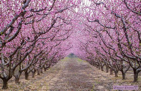 imagenes de sakura japon caminos m 225 gicos en el mundo que tienes que recorrer caminando