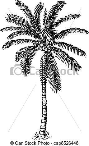 Pohon Pohonan Palm Palem 8cm vector of palm tree beautiful palm tree on white