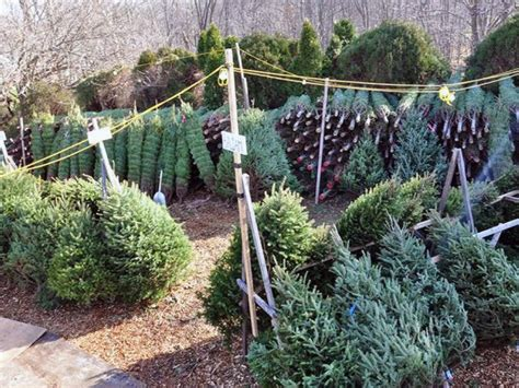 where to find christmas trees near me where to buy trees near novi novi mi patch