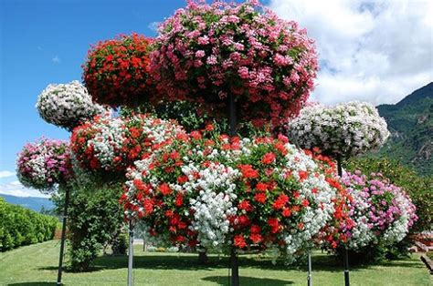 fiori antizanzare piante antizanzare da balcone o da interno le migliori