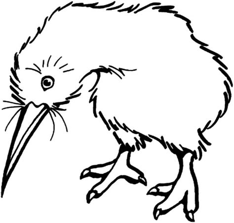 free kiwi bird coloring pages