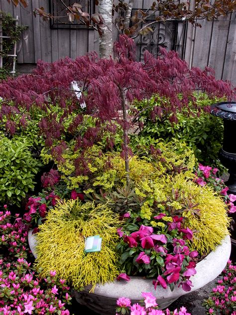 color garden chartreuse and burgundy in the garden a captivating color