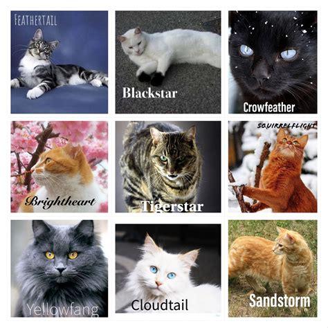 warrior cats  real life memesinreallife memes