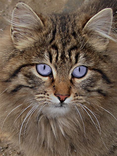 by cat cats wikiquote