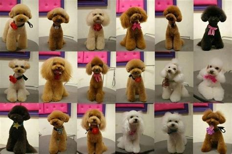 different poodle haircuts japanese dog grooming styles poodle cuts clips