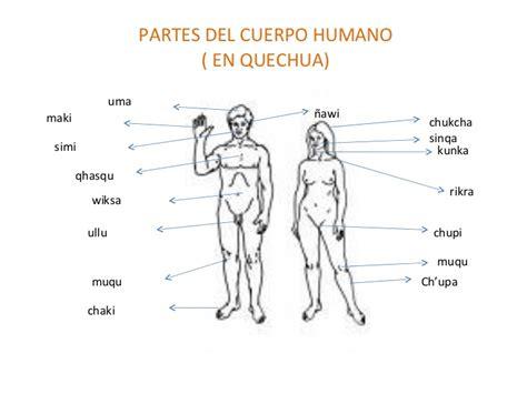 imagenes y nombres de las partes del cuerpo dibujos para pintar sobre el cuerpo humano partes externas imagui