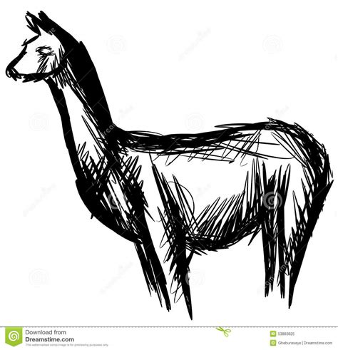 sketchbook lama sketch of a lama in black isolated stock vector image