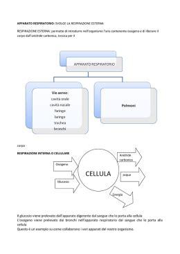 respirazione interna ed esterna apparato respiratorio di labottegadidattica