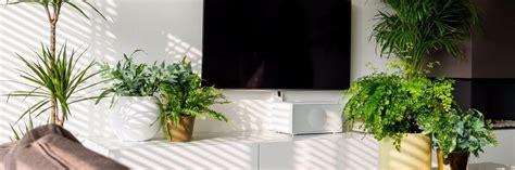 nieuw huis zuiveren nasa deze kamerplanten zuiveren de lucht in je huis