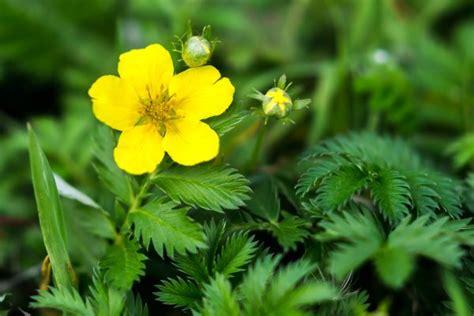 Come Attirare Le Api In Giardino 10 piante e fiori per attirare api e coccinelle in