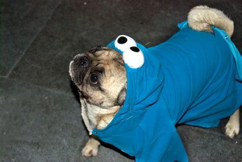 cookie pug cookie pug costume