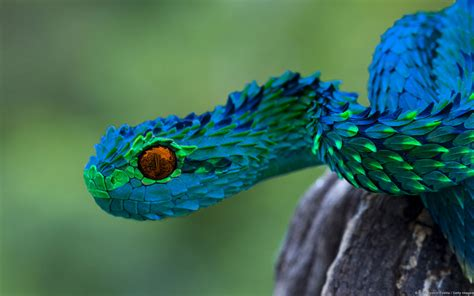 7 Strange And Wonderful Animal Facts by And Wonderful Animals Viper And Animal