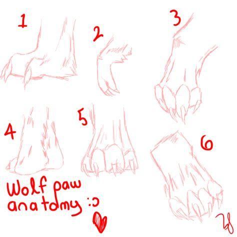 paw anatomy wolf paw anatomy