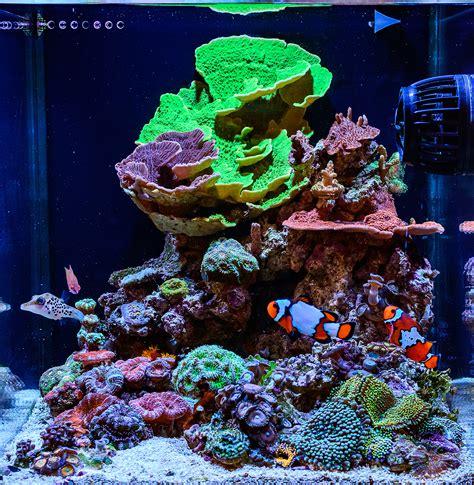 best nano fish tank teenyreef 2016 featured aquariums featured aquariums