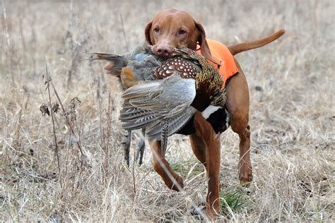 what are bird dogs social responsibility paying it forward in the pointing