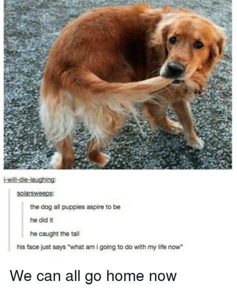 when can puppies go home 25 best memes about puppies puppies memes