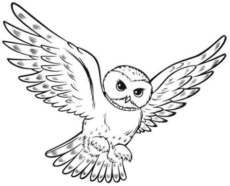 harry potter owl coloring pages pin brown bear colouring pages on pinterest