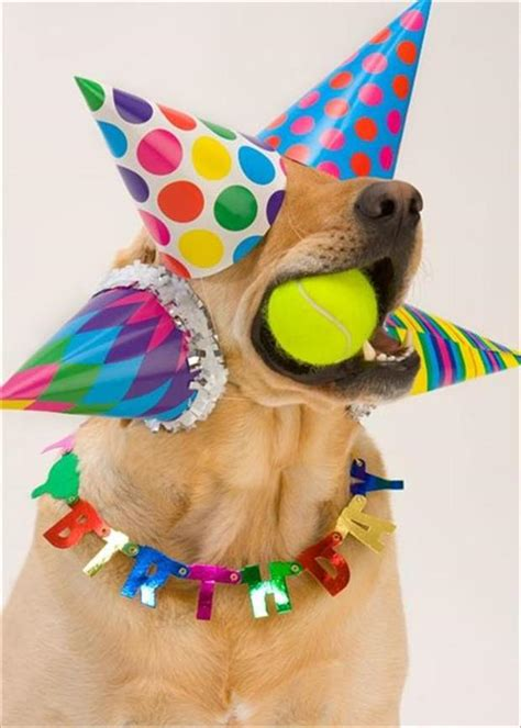 silly happy birthday images animal picture 42 pics