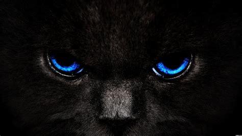 Cat Eye Blue Berkualitas black and blue background wallpaper black cat blue