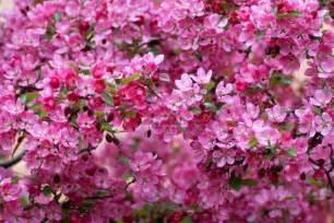 spring season flower hd free wallpapers