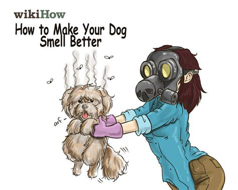 dog smell out of house how to get rid of dog smell in a house home improvement