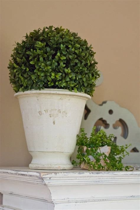 topiary styles farmhouse style topiary with a faux boxwood and gorgeous