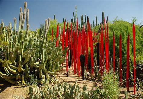 Az Botanical Garden Desert Botanical Garden