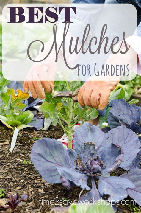 marvelous mulch how vegetable garden mulch can help you
