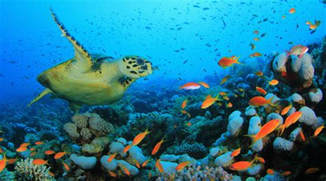 geoengineering 'parasols' could protect world's coral reefs