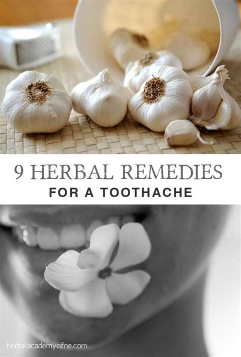 9 herbal remedies for a toothache herbal academy
