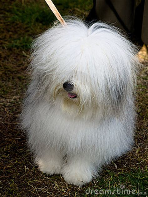small white breeds pin small white breeds on